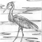 A sketch of a blue heron by Nova Scotia artist, Ivan Higgins.